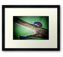 I had a little Beetle Framed Print