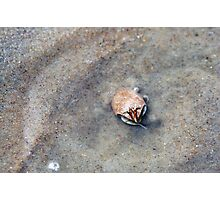 Sand Fiddler Photographic Print