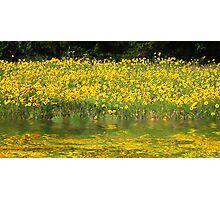 Field of Sunshine Photographic Print