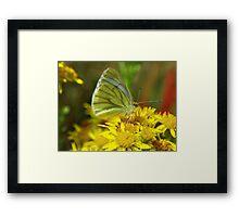 Angel of nature Framed Print