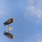 Green Heron by Kimberly Palmer
