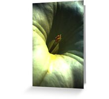 Macro Greeting Card