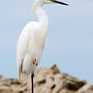 Snowy Egret on Sanibel Island by Bonnie T.  Barry