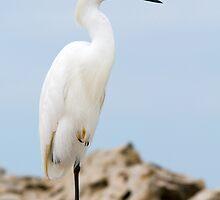 Snowy Egret on Sanibel Island by Bonnie T.  Barry