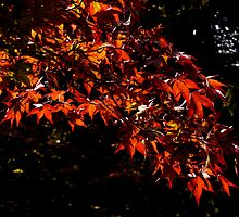 warm autumn coloured leaves by AngelaFoster