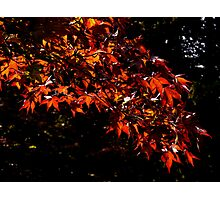 warm autumn coloured leaves Photographic Print