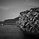 Gull Island by Ryan Piercey