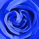 blue rose by SNAPPYDAVE