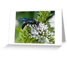 blue winged wasp (scolia dubia) Greeting Card