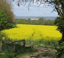 Field's edge footpath by Sue Purveur