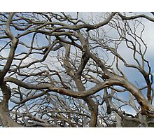 wildwood Photographic Print