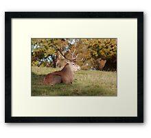 The Boss Stag (Red Deer) Framed Print