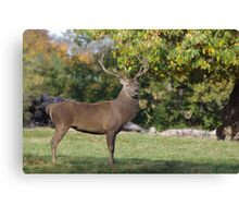 His Majesty -A Proud Red Stag Canvas Print