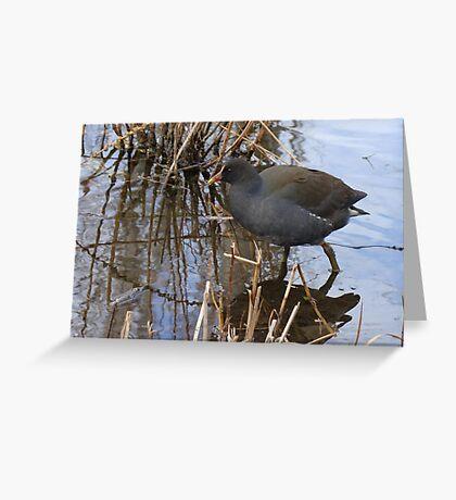 swamp hen Greeting Card