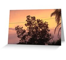 Colouful Banksia Sunset Greeting Card