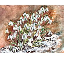 SNOWDROPS COLLECTION.(Painted) Photographic Print