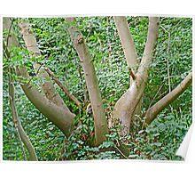 Pollarded Tree Poster