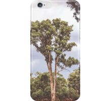 Stately Eucalyptus Tree iPhone Case/Skin
