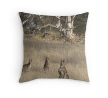 3 Kangaroos in Golden Grass  Throw Pillow