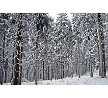 Frozen giants Photographic Print