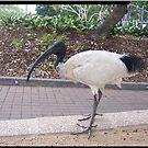 Big Bird by judygal