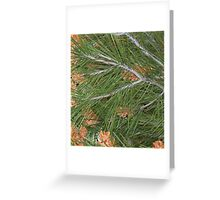 """ Pine "" Greeting Card"