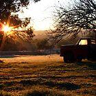 Morning Light by SharonD
