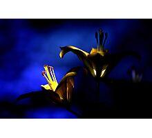 Wisdom's Light Photographic Print