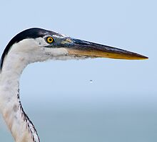 Great Blue Heron Profile by Bonnie T.  Barry