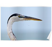 Great Blue Heron Profile Poster