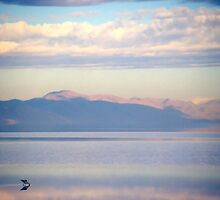 Water Fowl: Great Salt Lake/Antelope Island, Utah (3) by SteveOhlsen