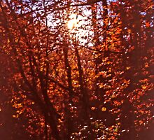 Sunlight thru Autumn Leaves by SteveOhlsen