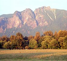 Distant Cattle Grazing Beneath Cascade Mountains by SteveOhlsen