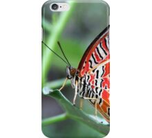 Leopard Lacewing - Cethosia cyane iPhone Case/Skin