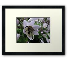 Loading Up With Pollen Framed Print