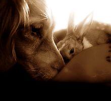 Interspecies Friendship by mhphotographyuk