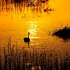 geese at sunset by craigfraizer