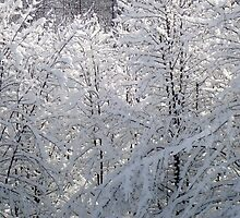 Winter Web of White   ^ by ctheworld