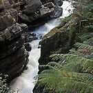 Leven Canyon by Martin Hampson