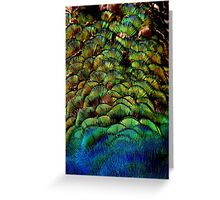 Colours of a Peacock Greeting Card