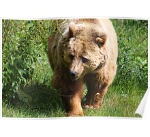 The Brown Bear...... Poster