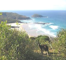 Kangaroo checking out the scenery by Gracie Townsend
