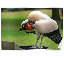 The King Vulture Poster