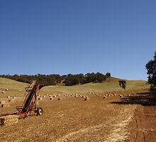 West Australian wheat field by georgieboy98