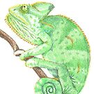 Chameleon Chillin' by Sarah Moore