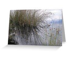 Grassy creekside Greeting Card
