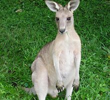 Kangaroo by Gracie Townsend