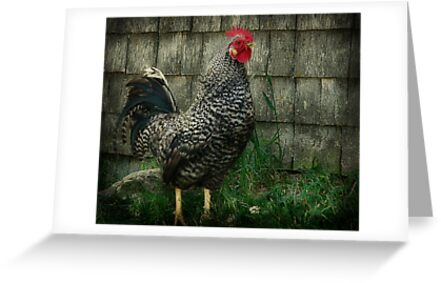 The Rooster by Gino Caron