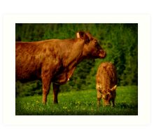 Cow and Veal Art Print
