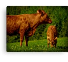 Cow and Veal Canvas Print